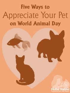 Five Ways to Appreciate your Pet on World Animal Day | Mother Natured