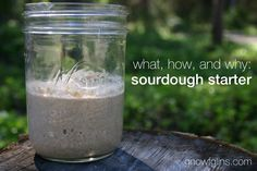 What, How, and Why of a Sourdough Starter | How do you make a sourdough starter? What's happening in a sourdough starter? What's so great ab...