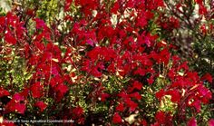 Texas Native Plants Database - choice for landscaping.