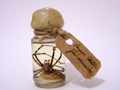 halloween prop fantasy animal specimens - Google Search.  It reminds me of Harry Potter and the cruciatus (sp?) curse.