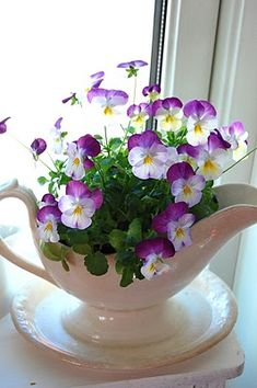 "violas...so pretty and this is so easy to achieve...place a 4"" pot of blooming violas or any flowering plant ( miniature rose bushes are gorgeous set up like this, bought at most florists or greenhouses in the Spring ) .. don't let them dry out but never let them sit in water and enjoy them for weeks on your window sill...transfer to your garden and prolong their beauty."