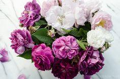 Old Garden Roses via Hedgerow Rose