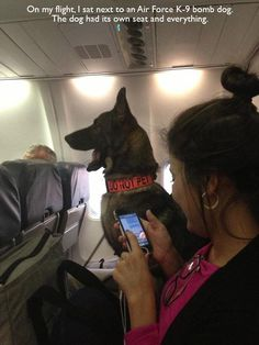 On my flight, I sat next to an Air Force K-9 bomb dog.  Rank has its privileges.