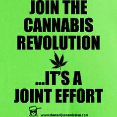 it is....cannabis