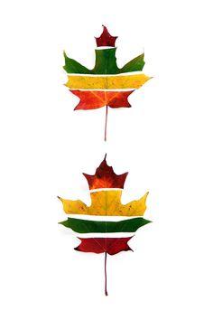 striped maples (mary jo hoffman)