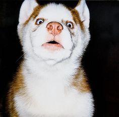 """Wordpress Basics: Embedding a Video.  In Husky that would be """"rooooooo rooooooooo ahhhhhh roooooooooo!"""""""