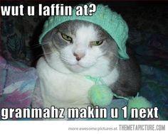 unhappy kitty model