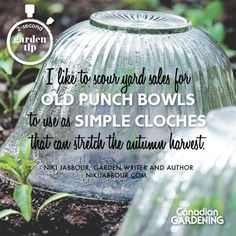 2-second garden tip by Niki Jabbour (nikijabbour.com). Photo courtesy of the Year Round Vegetable Gardener, Storey Publishing.