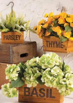herbs, boxes, weather, gardens