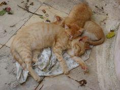 corfu Paleokastritsa cats and kittens