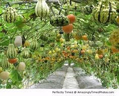 Now that's a squash tunnel!