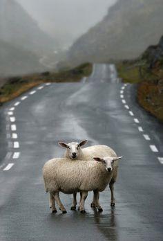 Highland roadblock .