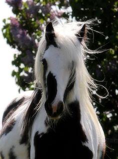 awesome black & white horse