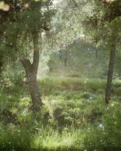 fairies, photograph, tree, magical garden, art, peaceful places, enchant forest, gardens, magical forest