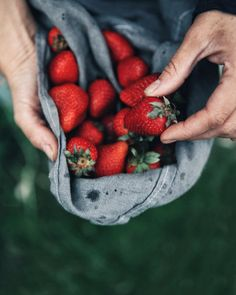 Strawberry picking i