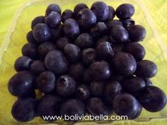 When you live in Bolivia, finding blueberries is like striking gold!