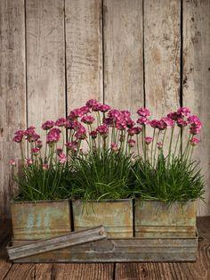 galvanized planters on a galvanized tray.