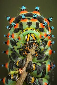 Insect photo by Igor Siwanowicz