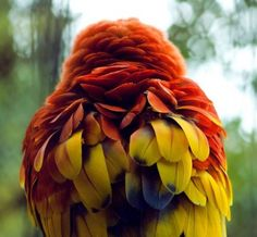 theanimalblog:    Photography by Lindsey Kemp