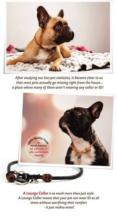 A comfortable dog collar for lounging.