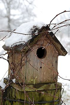 a winter retreat~ bird house
