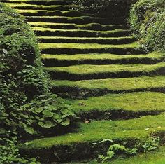The image of moss brings a sense of calm, age, and stillness. Japanese gardens, and the Chinese before them, have long used this quality of quietude to excellent effect. moss art, garden ideas, stairs, yard, stairway, green, gardens, design blogs, moss garden