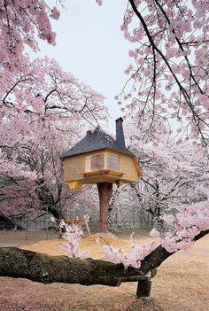 Amazing Tree Houses - Nakamaru, Hokuto City, Yamanashi