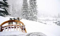 Aspen, CO.  Exhilarating dog sledding ride.