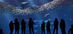 Monterey Bay Aquarium--not in the Bay Area, but we went last year and it was amazing