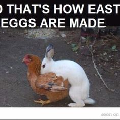 How Easter Eggs are made. (It's wrong & I know it!) :)