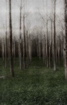 dark forest, winter trees, landscape photography