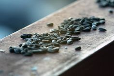Seed Storage: How to Store Seeds and for How Long