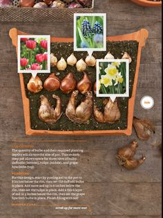Plant bulbs in fall, blooms in spring - BHG magazine oct 2012