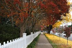 Autumn on Prince Avenue 2010