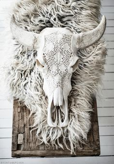 White cow skull decor on fur; taxidermy; perforated