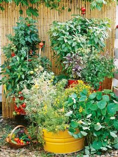 A Good Example of a Small Space Container Garden