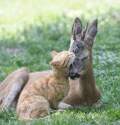 Deer & Kitty Love