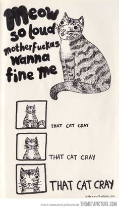 Meow so loud…