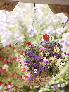 Recipes for hanging baskets www.blackrhinoservices.com