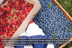 P Allen: Berry Good Fun: Summertime Edibles! - AY Magazine - June 2012 - Arkansas