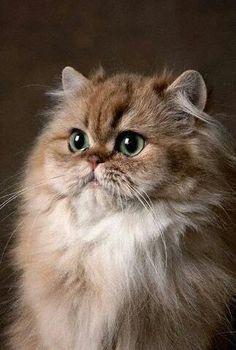 Kitty gaze #meowmonday