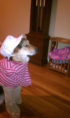 Dog Halloween Costume Contest: Casey the Collie