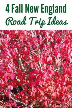 4 Fall New England Road Trip Ideas