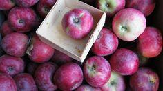 Apples at a california farmer's market