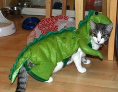 Catosaurus rex