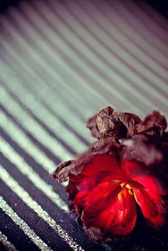 #SPoceania #Wildflower