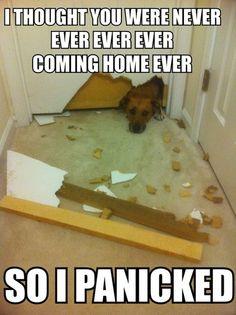 I panicked! My sister's dog