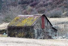 A piece of Americana right here with the moss growing on the roof of this old barn.