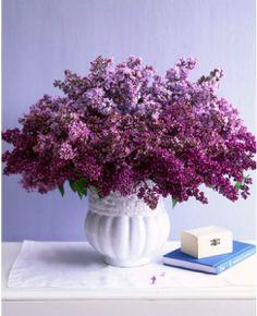 lilacs - love them