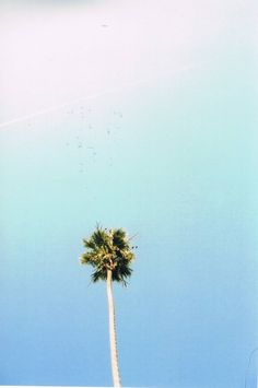 theres something about palms…they just represent holidays and cocktails and lazy afternoons spent at the beach ..